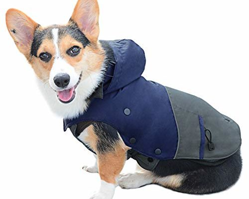 Top 10 Best Winter jackets and raincoats for pets reviews