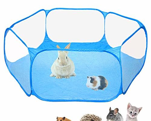 Best list of Guinea pig toys to buy online.