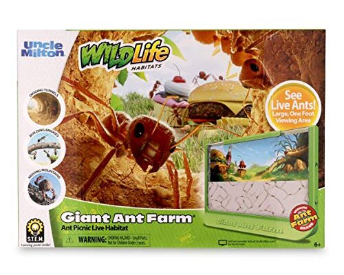 Best Ant Farm Reviews.